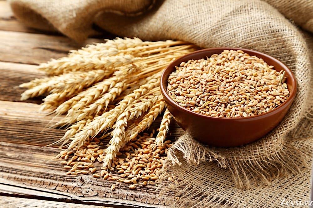 Pšenice.